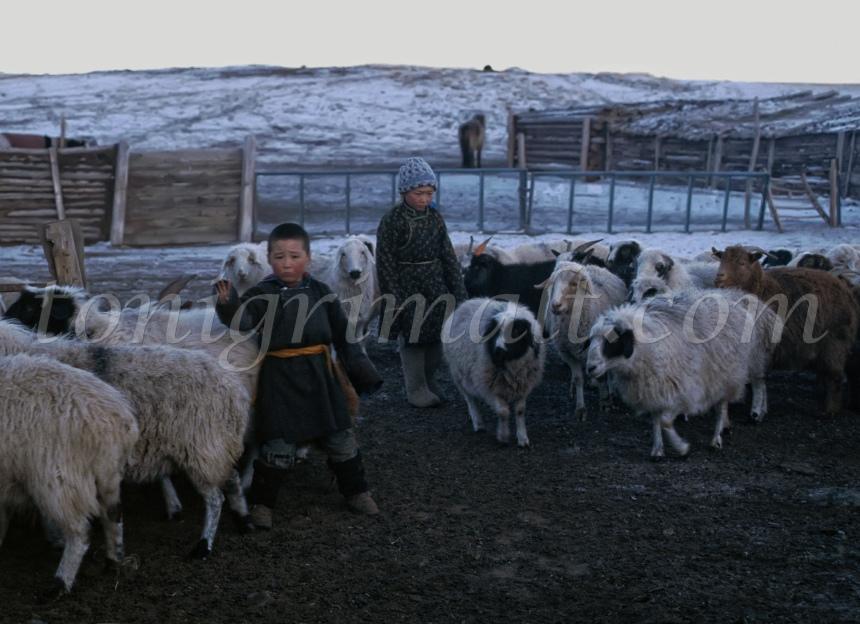 Jovenes Mongoles